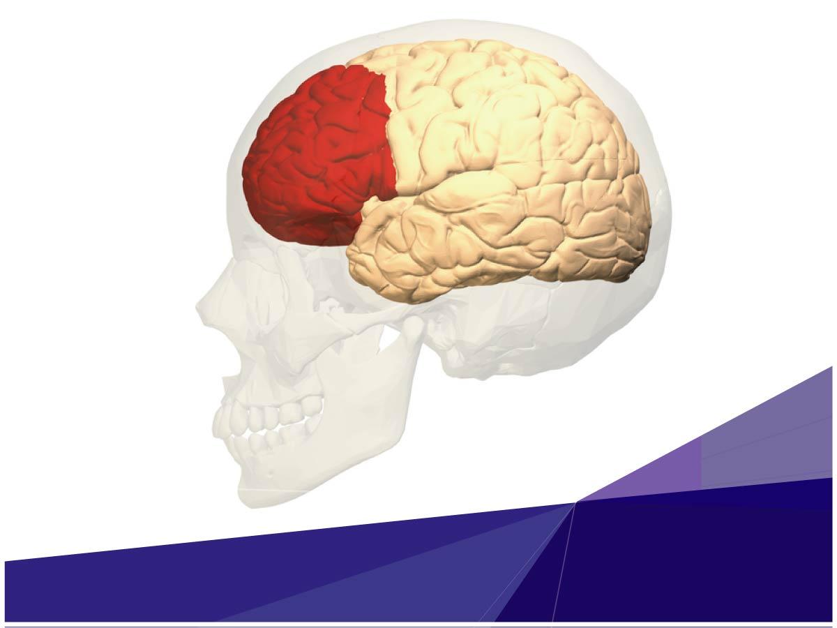Investigador de Indoamérica evalúa las habilidades de la Corteza Prefrontal