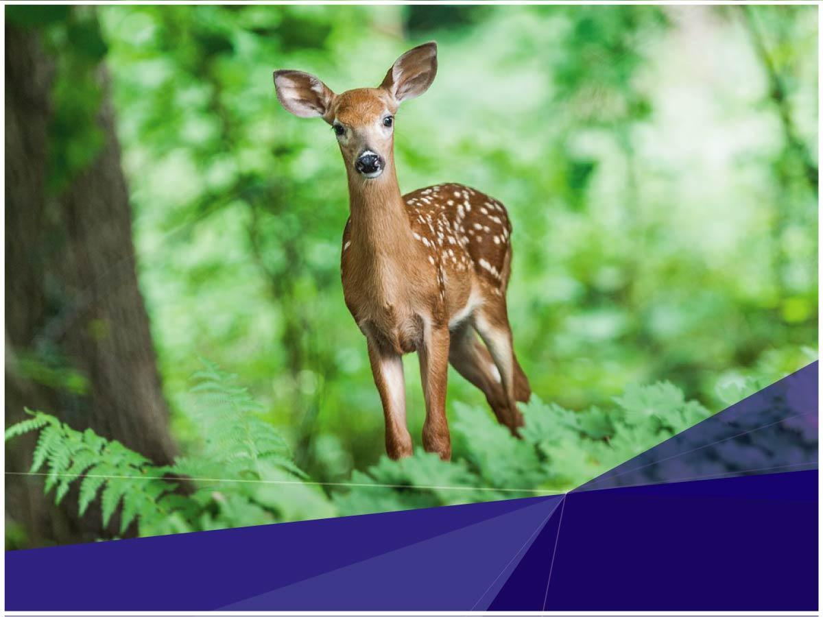 Investigadora de Indoamérica analiza las expectativas y los desafíos de la investigación sobre enfermedades de la vida silvestre